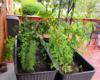 plantter