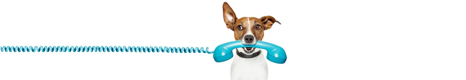 dog biting a telephone